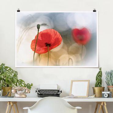 Poster - Mohnblumen am Morgen - Querformat 2:3