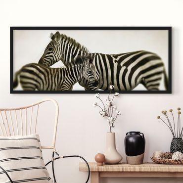 Bild mit Rahmen - Zebrapaar - Panorama Querformat