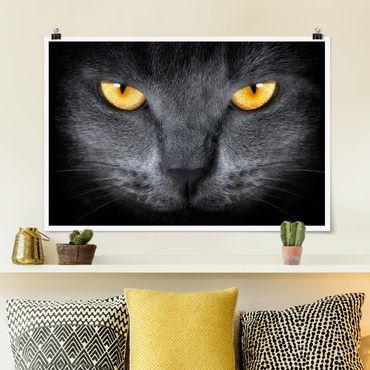 Poster - Cats Gaze - Querformat 2:3
