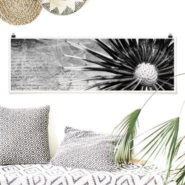 Poster - Pusteblume Schwarz & Weiß - Panorama Querformat