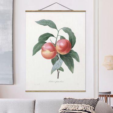 Stoffbild mit Posterleisten - Botanik Vintage Illustration Pfirsich - Hochformat 4:3