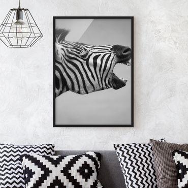 Bild mit Rahmen - Brüllendes Zebra II - Hochformat 3:4