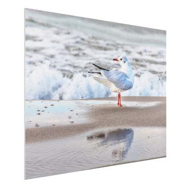 Forex Fine Art Print - Möwe am Strand vor Meer - Querformat 3:4