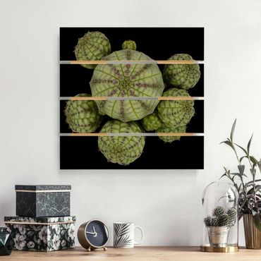 Holzbild - Euphorbia - Seeigelwolfsmilch - Quadrat 1:1
