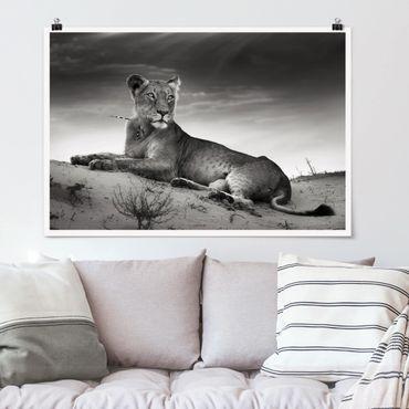 Poster - Resting Lion - Querformat 2:3