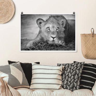 Poster - Lurking Lionbaby - Querformat 2:3