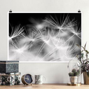Poster - Bewegte Pusteblumen Nahaufnahme auf schwarzem Hintergrund - Querformat 2:3