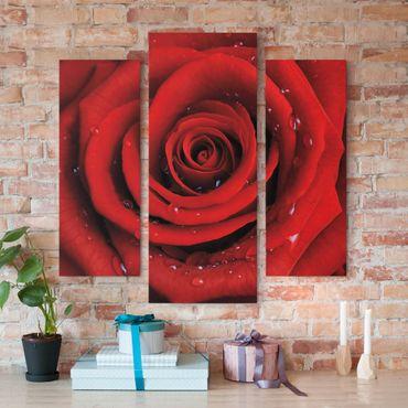 Leinwandbild 3-teilig - Rote Rose mit Wassertropfen - Galerie Triptychon
