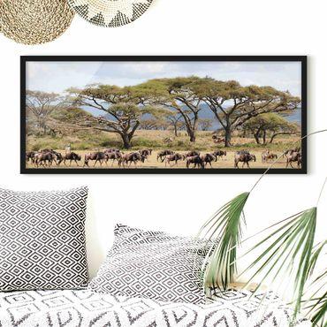 Bild mit Rahmen - Gnuherde in der Savanne - Panorama Querformat