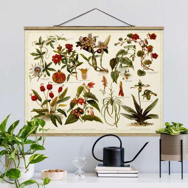Stoffbild mit Posterleisten - Vintage Lehrtafel Tropische Botanik II - Querformat 4:3