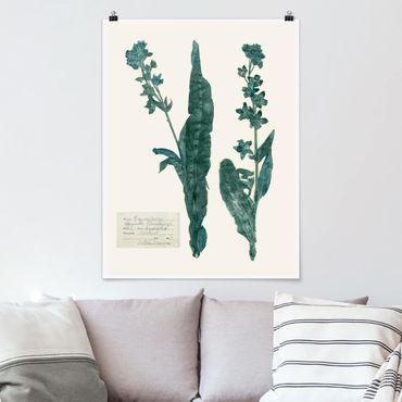 Poster - Gepresste Blumen - Hundszunge - Hochformat 3:4