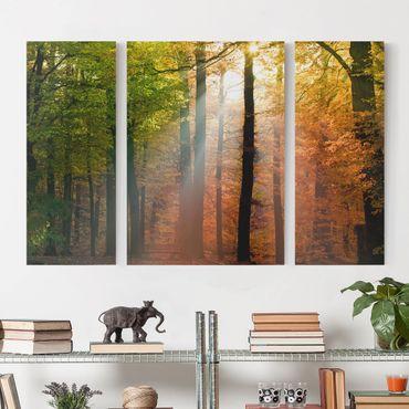 Leinwandbild 3-teilig - Morning Light - Triptychon