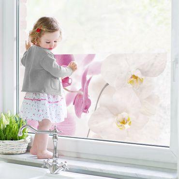 Fensterfolie - Sichtschutz Fenster Delicate Orchids - Fensterbilder