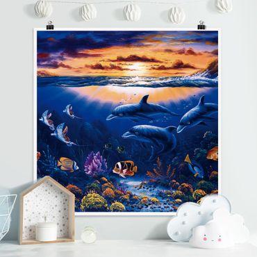 Poster - Dolphins World - Quadrat 1:1
