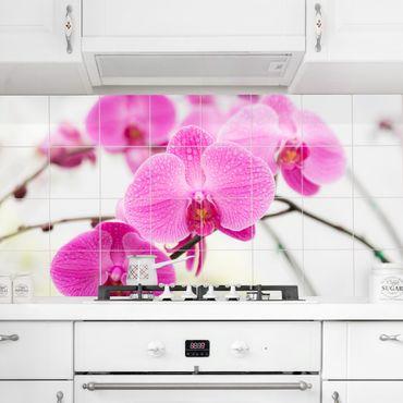 Fliesenbild - Floral Nahaufnahme Orchidee
