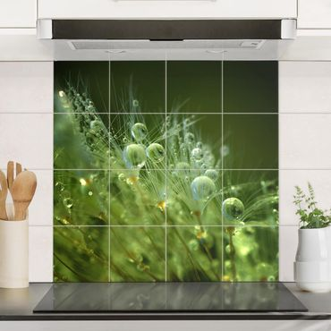 Fliesenbild - Grüne Samen im Regen - Fliesensticker Set quadratisch