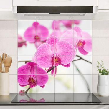 Fliesenbild - Nahaufnahme Orchidee