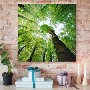 Glasbild - Bäume des Lebens - Quadrat 1:1 - Waldbild Glas