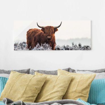 Glasbild - Bison in den Highlands - Panorama