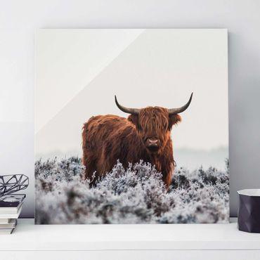 Glasbild - Bison in den Highlands - Quadrat 1:1