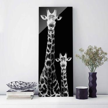 Glasbild - Giraffen Duo schwarz-weiss - Panorama Hoch