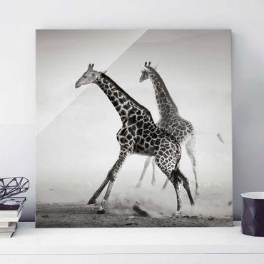 Glasbild - Giraffenjagd - Quadrat 1:1