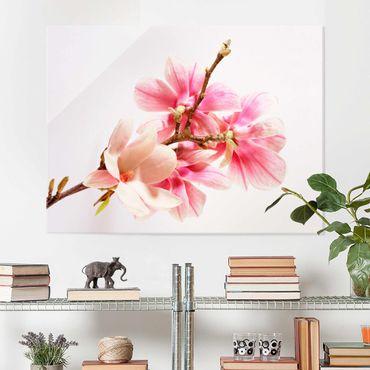 Glasbild - Magnolienblüten - Quer 4:3