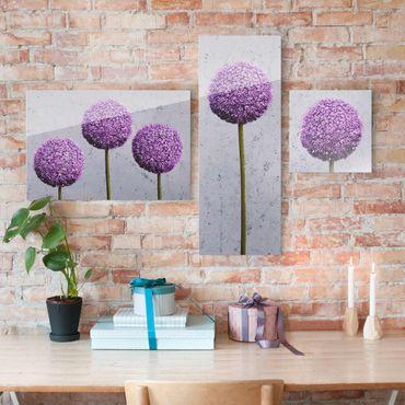 Glasbild mehrteilig - Allium Kugel-Blüten 3-teilig