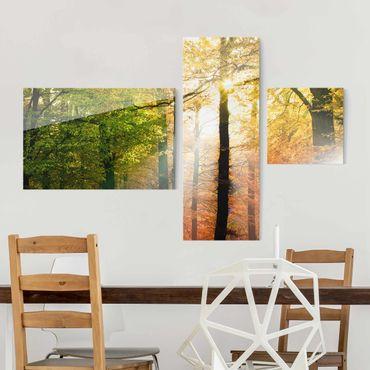 Glasbild mehrteilig - Morning Light Collage 3-teilig