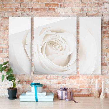 Glasbild mehrteilig - Pretty White Rose 3-teilig