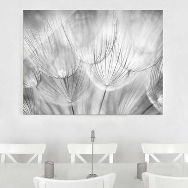 Glasbild - Pusteblumen Makroaufnahme in schwarz weiss - Quadrat 1:1 - Blumenbild Glas