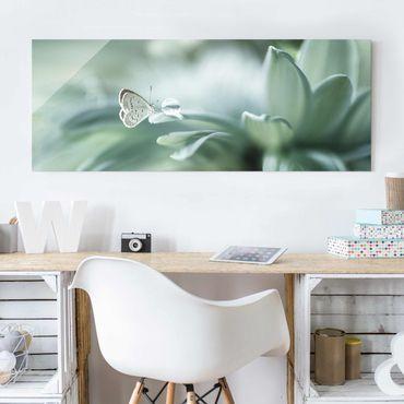 Glasbild - Schmetterling und Tautropfen in Pastellgrün - Panorama