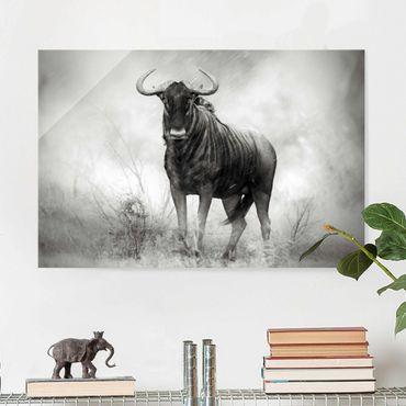 Glasbild - Staring Wildebeest - Quer 3:2