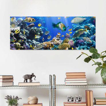 Glasbild - Underwater Reef - Panorama Quer