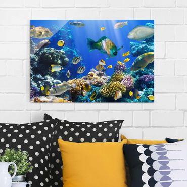 Glasbild - Underwater Reef - Quer 3:2