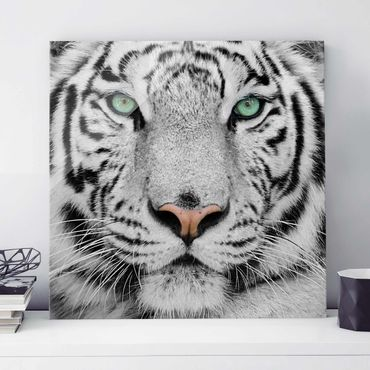 Glasbild - Weißer Tiger - Quadrat 1:1