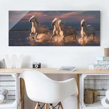 Glasbild - Wilde Pferde in Kamargue - Panorama