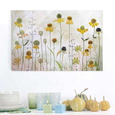 Glasbild - Zarte Helenium Blüten - Querformat 3:2
