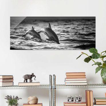 Glasbild - Zwei springende Delfine - Panorama