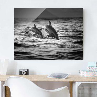 Glasbild - Zwei springende Delfine - Querformat 3:4