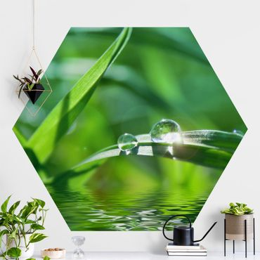 Hexagon Mustertapete selbstklebend - Green Ambiance II