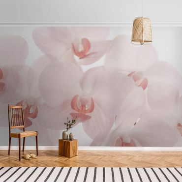 Metallic Tapete  - Helle Orchidee Blumentapete - Svelte Orchids