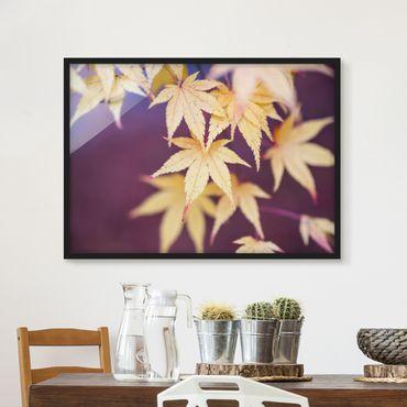 Bild mit Rahmen - Herbstlicher Ahorn - Querformat