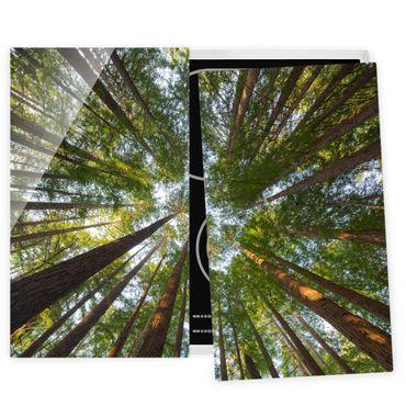 Herdabdeckplatte Glas - Mammutbaum Baumkronen