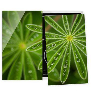 Herdabdeckplatte Glas - Morgentau auf Lupinenblättern - 52x60cm