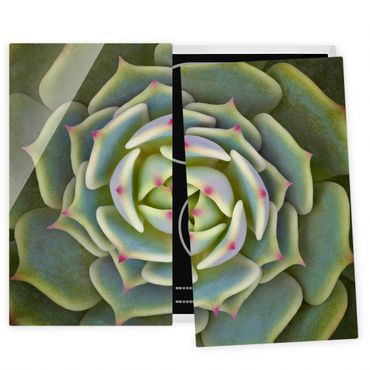 Herdabdeckplatte Glas - Sukkulente - Echeveria Ben Badis - 52x60cm