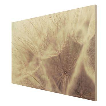Holzbild Pusteblume - Detailreiche Pusteblumen Makroaufnahme mit Vintage Blur Effekt - Quer 3:2