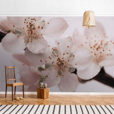Fototapete - Im Herzen der Blüte