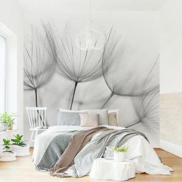 Fototapete - In einer Pusteblume Schwarz-Weiß