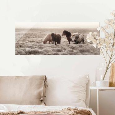 Glasbild - Island Wildpferde - Panorama